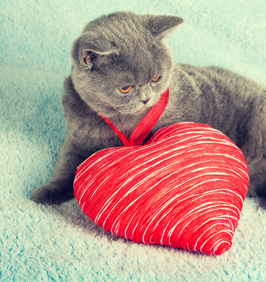 cat with a big heart